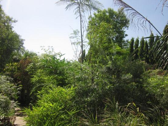 Plant Kingdom (1)
