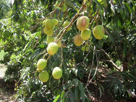 Plant Kingdom Udaipur