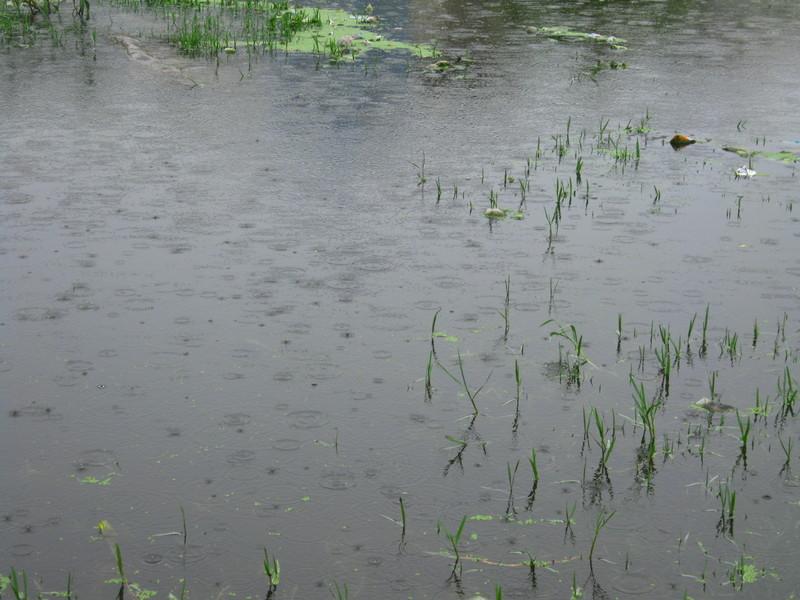 Monsoon Udaipur