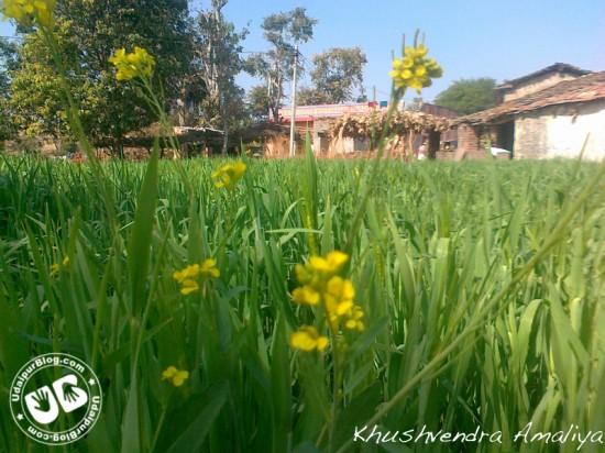 Khushvendra Amaliya #1
