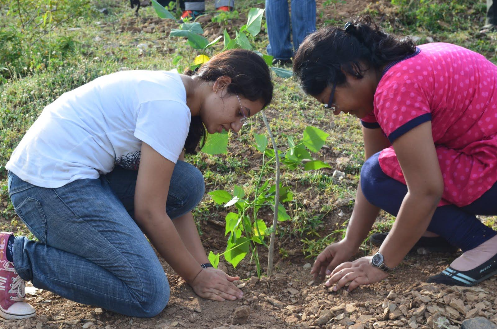 iimu tree plantation