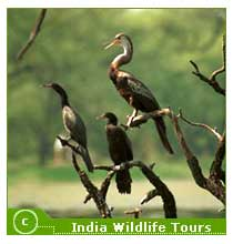 wildlife-sanctuaries-near-ranthambore-national-park