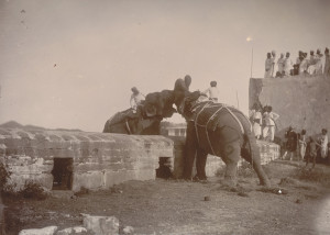 Elephant fight, Odeypur