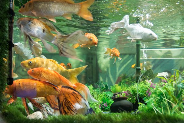 The largest fish aquarium in india 39 under the sun for Well water for fish tank