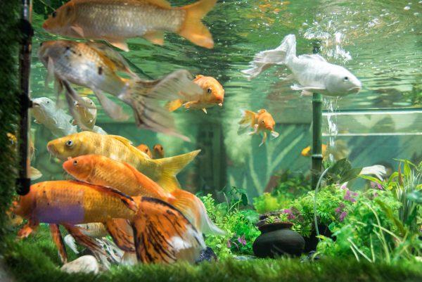 the largest fish aquarium in india under the sun aquarium