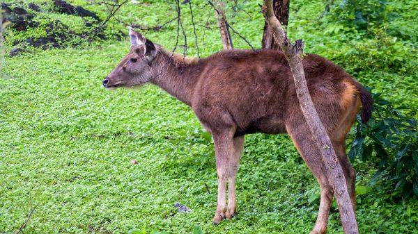 Sajjangarh Biological Park Udaipur
