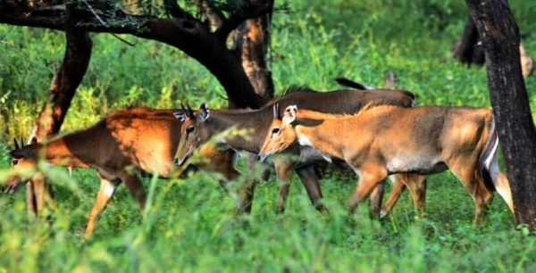 Wildlife Sanctuaries and Nature Parks Udaipur
