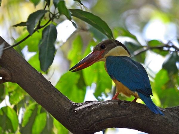 Sitamata Wildlife Sanctuary – Birding Tours in Udaipur